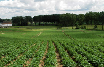 Pommes de terre conventionnelles ou en bio: influence du choix des cultures dans la rotation