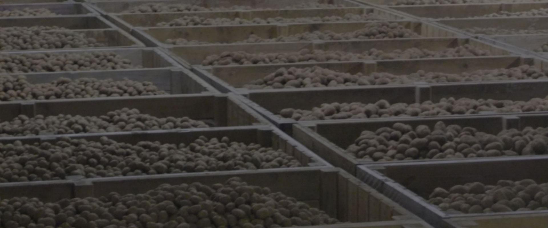 L'utilisation de pommes de terre transformées aux États-Unis à un niveau record – mars 2019