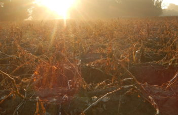 Modulation continue de la dose de défanant à l'aide d'images fournies par des capteurs de végétation : le projet Défapot