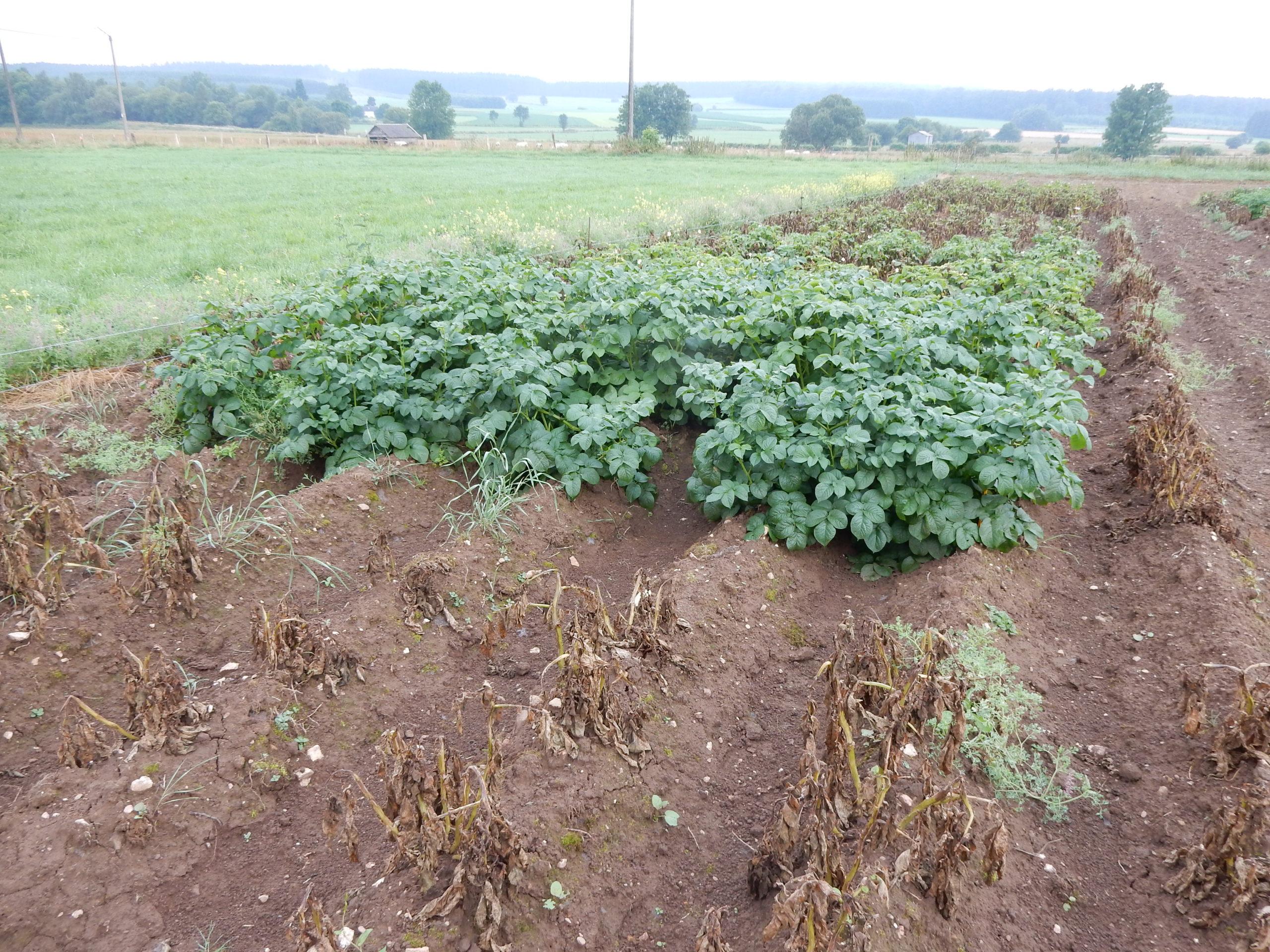 Liste belge des variétés robustes bio – 2020