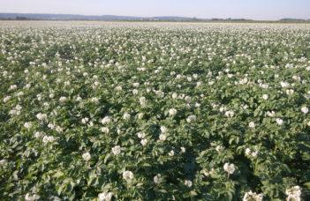 Avertissements et VigiMAP : lutte contre le mildiou, évolutions 2021