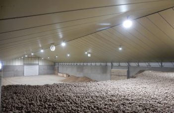 Valorisation des pommes de terre en tant que fertilisant : conditions