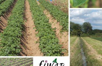 Fiwap Info 166 : Juin 2020