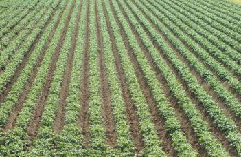 Plantations 2015. Points d'attention phytotechniques suivant la variété et densités de plantation en fonction de la variété.