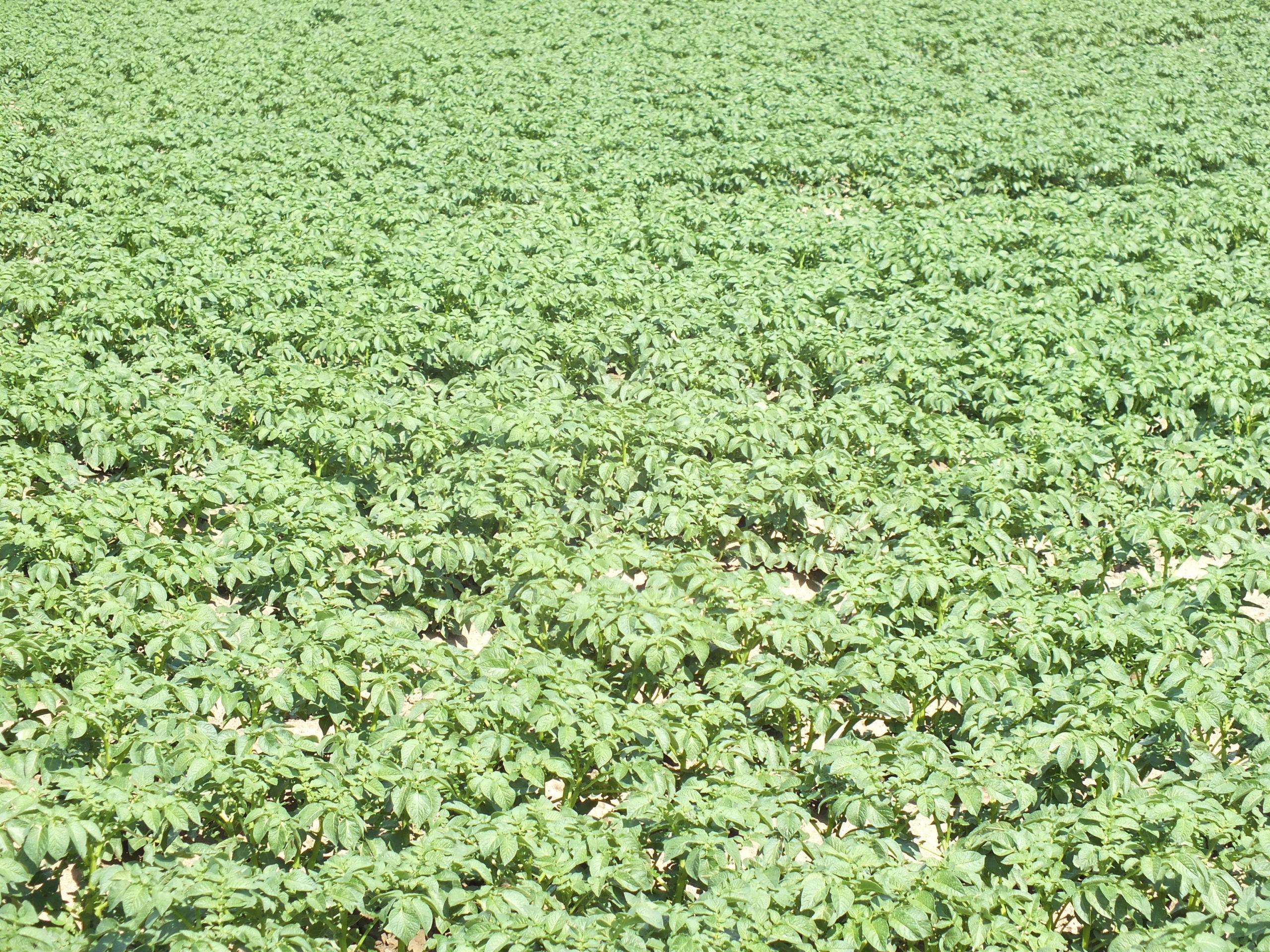Intérêt et pratique de la fertilisation foliaire
