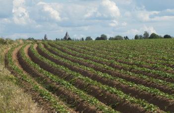 Valorisation des engrais de ferme en culture de pomme de terre