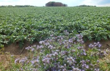 Jeudi 26 août 2021 : Weuthen Kartoffeltag