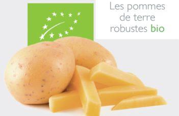 Les pommes de terre robustes bio