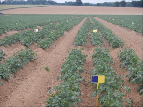 Synthèse des essais pluriannuels (2017 à 2020) en produits « Alternatives ou compléments au cuivre » de lutte contre le mildiou de la pomme de terre en agriculture biologique